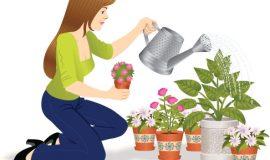 النباتات المزهرة