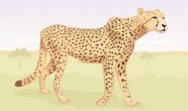 الفهد
