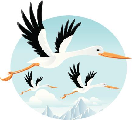الطير المهاجر
